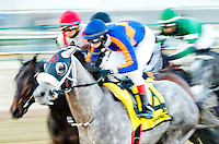 NEW YORK, NY - MARCH 04: El Areeb #4, ridden by Trevor McCarthy takes the early lead in the Gotham Stakes on Gotham Stakes Day at Aqueduct Racetrack on March 4, 2017 in the Ozone Park neighborhood of New York, New York. (Photo by Scott Serio/Eclipse Sportswire/Getty Images)