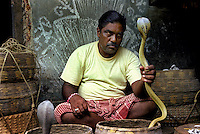In Padmakesharpur in the state of Orissa in East India a charmer holds a Dudh Cobra which translates as a milk Cobra. He is surrounded by an assortment of snakes in the baskets around him.