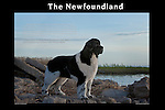 Newfoundland<br />
