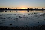 Bolinas Lagoon at low tide at sunset