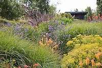 Flowering perennials (Verbena, Euphorbia, Knifophia) in tall grass California meadow garden