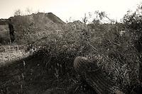 A fallen cactus along the trail at San Tan Regional Park