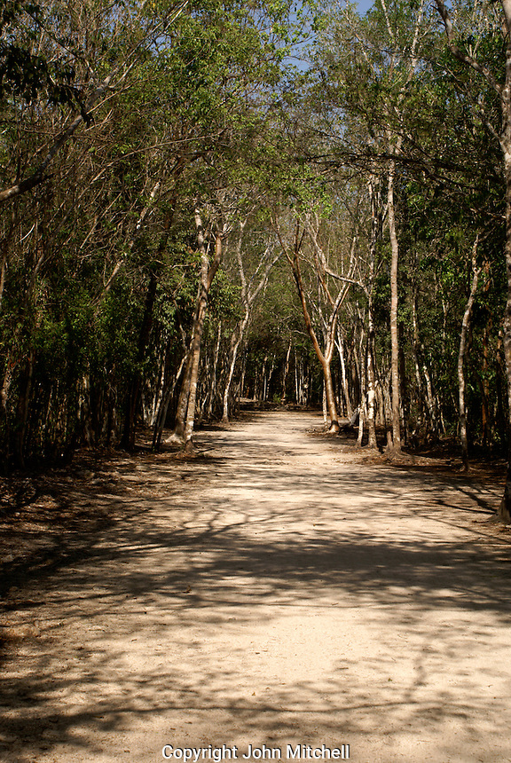 Ancient Mayan white road or Sacbe at the Mayan ruins of Coba, Quintana Roo, Mexico..