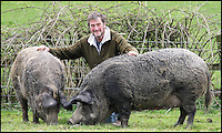 BNPS.co.uk (01202 558833)<br /> Pic: DavidFitzgerald/BNPS<br /> <br /> Kenny with his two iron-age pigs, Hilda and Mabel, who appeared in series 3 of Game of Thrones.<br /> <br /> Supplying farm animals to TV and film crews, including the huge hit series Game of Thrones, has saved Kenny Gracey's bacon.<br /> <br /> The 57-year-old farmer started supplying pigs, cows, donkeys, goats and even a trained deer to Hollywood seven years ago, when the recession was hitting his business hard.<br /> <br /> Mr Gracey said the film work his animals get has helped him pay the bills and keep his business going.<br /> <br /> Forthill Farm in Tandragee, Northern Ireland, specialises in traditional breeds like Longhorn cattle and Gloucestershire old spot pigs, ideal for shows and films set in medieval times.
