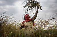 Bhateri, age 65, harvests a mustard crop. Bhateri is an agricultural labourer from Lagarpur village in Haryana. She and other labourers are particularly vulnerable to the development of SEZs. Unlike land-owning farmers, she will receive no compensation for the acquisition of land and it is almost certain that she will not be offered employment in the high-tech industrial facilities proposed in SEZs. ..Reliance Industries (RIL), India's largest private company, has been granted a license to acquire and develop 25,000 acres of land as a Special Economic Zone (SEZ) in Jhajjar district in the state of Haryana. This land borders Delhi and is at present almost exclusively agricultural. The land has huge potential value as it borders Delhi and will be serviced by the proposed Kundli-Manesar-Palwal Expressway. At present RIL are offering farmers INR2.2 million (&pound;27,000) per acre. Many of Jhajjar's farmers are refusing to sell and have joined a national struggle to resist the development of SEZs. ..India's Special Economic Zones (SEZs) are areas of land owned by private companies which are deemed to be foreign territory for the purpose of trade, duties and tariffs. SEZs have been declared &quot;public utilities&quot; making collective bargaining and strikes illegal. SEZs are not subject to India's Environment Protection Act. It is questionable whether SEZs are consistent with the Indian constitution. The Indian finance ministry is concerned that SEZs will distort land, capital and labour costs. SEZ exemption from tax and duties will result in lost revenue for India...The law allowing for the establishment of SEZs in India came into effect in February 2006. The law was not debated in parliament. According to the Citizen's Research Collective, a total of 760 SEZs have been approved in 20 states across India. At present most of the land designated for the development of SEZs is agricultural. The Government of India says it has promoted the scheme to encourage exports, create jobs and rai