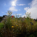 Edinburgh, UK. 28.08.2016. The Royal Botanic Garden Edinburgh. The sun makes a welcome appearance in the RBGE as the Edinburgh Festival Fringe draws to a close. Photograph © Jane Hobson.
