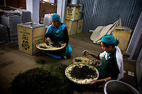 From the drier, the tea is moved into a room where ladies, again selected for their meticulous nature, sit on the floor, sorting through the leaves by hand. They discard stray stems and twigs, and hand pick the undamaged leaves to be packed as the Muscatel Second Flush as the broken leaves are put aside for tea-bagging.