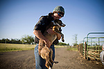 Avril Gilliland holds her cattle dog at the Lucky Dog Ranch in Dixon, CA May 4, 2010.