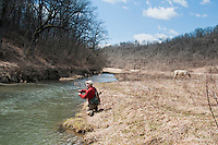 An angler fishes among livestock on the Green River a trout stream in the Driftless Area of southwestern Wisconsin.