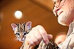 Wild Cats Fund