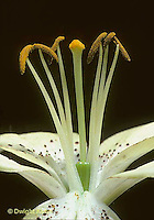 Flower Reproduction