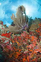 Sea fan coral scenic<br />