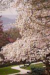 Magnolia and Dogwood Trees, Eden Park, Cincinnati, OH