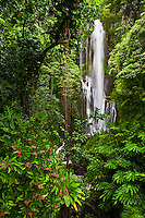 A stop to smell the roses and take in the waterfall view along the Hana Highway, Maui.