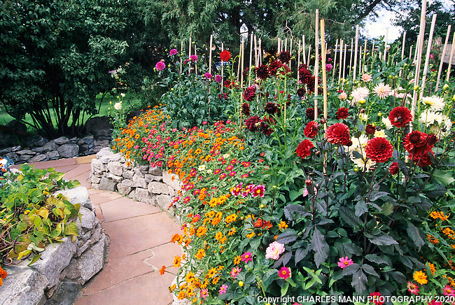 Susan Blevins of Taos, New Mexico, created an elaborate home garden featuring containers, perennial beds, a Japanese themed path and a regional style that reflectes the Spanish and pueblo architecture of the area.Beds of dahlias and zinnias create a colorful wall between stone raised beds.
