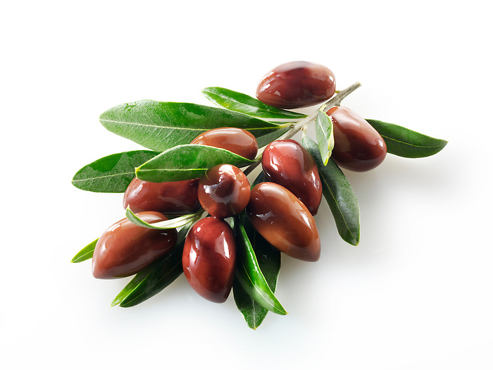 Fresh kalamata olives on an olive sprig  photos, pictures & images.