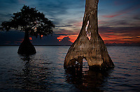 Cypress tree shines at Blue Cypress Lake, Florida