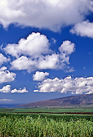 Ma'alaea, the Central Valley, sugarcane and the West Maui Mountains on the island of Maui, circa 2000.