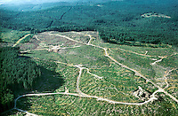 Aerial of a Clearcut Forest near Castle Rock, Washington, Lumber industry. Washington USA forest.