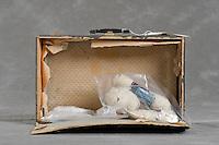Willard Asylum Suitcase Project<br /> <br /> &copy;2011 Jon Crispin<br /> ALL RIGHTS RESERVED<br /> <br /> Willard Suitcases / John C.
