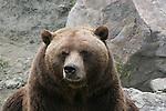 Bears, BT