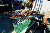 Sardine fishing boats, Mexico