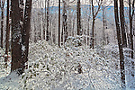 Winter forest on Whitehouse Mountain, Rocky Fork, Unicoi County