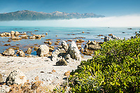 Rocky coast of Kaikoura coastline with Kaikouras mountains in background and coastal vegetation, Kaikoura, Marlborough Region, South Island, East Coast, New Zealand