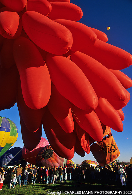 A balloon ressembling a giant red chile ristra rises up at launch at the Albuquerque International Hot Air Balloon Fiesta
