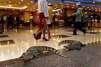 Guangzhou has huge live reef fish restaurants that have 3 or 400 chinese chefs and live crocodiles on the floor of the mall-like area... the crocs mouths were taped shut, and they would be meals soon, but people would be walking along, talking on their cell phones, not paying attention and trip over live, hissing, charging crocodiles... Restaurant is Yumin Restaurant 2287 8833..Main contact:.Nicole_artbud@hotmail.com or nicolecheng@vip.sina.com.Cell phone number: +(86) 139 2214 1600.Nicole Cheng.Senior Associate-Guangzhou.Burson Marsteller.Room 6805A, CITIC Plaza, 233 Tianhe North Road.Guangzhou, 510613 P.R.C..+8620 3877 1820 X229 Work Phone.3877 1815 Fax.Nicole_cheng@bm.com.Initially reef fish only came from the South China Sea, but transport developed and fish now come from all over S.E. Asia.  The whole reef fish trade crashed with the 97-98 HK stock market crash.  LRF trade is directly linked to economy.  With China coming online financially the trade is booming.  These fish are often used for celebratory meals in Hong Kong, but in Guangzhou the fish are so cheap and the apartments are so small that many people eat out...  And the stereotype is that there is lots of food left on the table.  Often a fish is popular because of its color... more than its taste.
