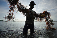 Bapak I Nyoman Yasa working on his seaweed farm, Kutuh, Bali, Indonesia.