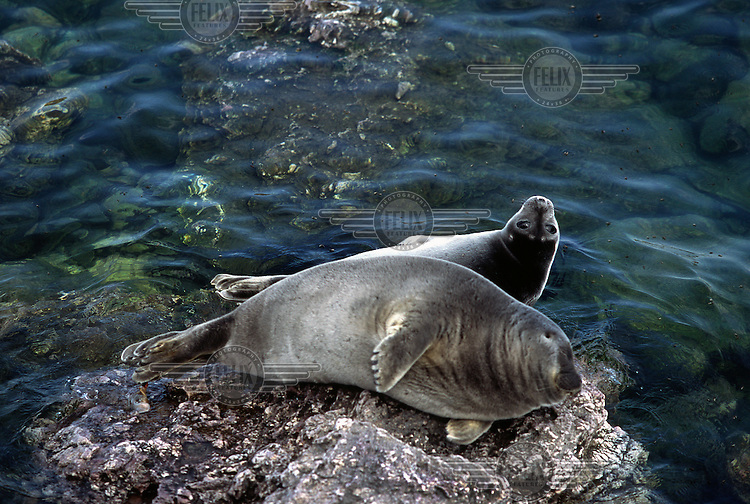 A mother freshwater seal and her pup rest on rocks over the clear waters of Lake Baikal. The lake is the world's deepest and oldest freshwater lake. It contains over 20 percent of the world's freshwater reserves.