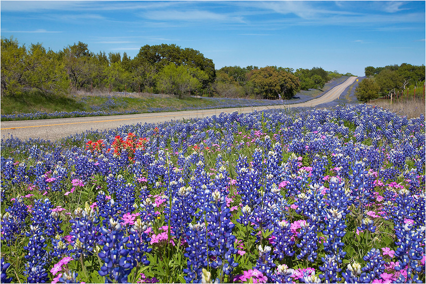 Along Texas RR 152 between Llano and Castell, Texas wildflowers, including bluebonnets and Indian paintbrush, often line the roadside each spring.