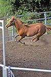 Horse In Ring