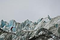 guide cutting steps on Franz Josef glacier, New Zeland