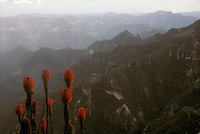 View of the  Copper Canyon from the Divisadero lookout, Chihuahua, Mexico. This is an archival image taken in 1990.