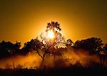 Okavango morning