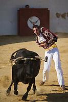 Europe/France/Aquitaine/40/Landes/ Vielle-Tursan: Ecarteur lors de la course landaise organisée pour la fête du village //  France, Landes, Vielle Tursan, ecarteur performer during a bullfight at the Fete du Village Festival