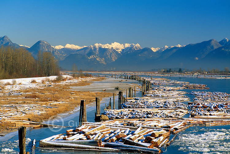 Snow Covered Log Booms in the Pitt River, and the Coast Mountains in the Fraser Valley, Southwestern British Columbia, Canada, in Winter