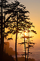 Sunset through pine trees at Ecola Point; Ecola State Park, Cannon Beach, northern Oregon Coast.