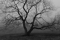 All about Fog! B&W landscapes and trees enveloped in fog!!