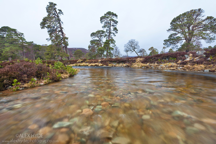 Wide angle view from middle of river (Lui Water), Braemar, Cairngorms National Park, Grampian Mountains, Scotland, UK, February.