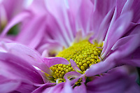 Flowers close-up macro.Health Care Images / Healing Art
