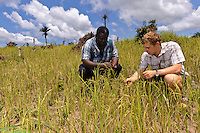 Rocco Falconer and Eddie Boston-Mammah examing a rice crop at a plantation run by Planting Promise, Newton, Freetown, Sierra Leone. Planting Promise is an organization dedicated to the development of education in Sierra Leone. Its aim is to bring opportunities to initiate self-run, self-supporting projects that offer real solutions to the difficulties facing the world's poorest country. They believe real and lasting development comes from below, from local projects that address specific needs, rather than large international models. To this end, they currently run five projects that aim to bring wealth into the country through business. The profits from these businesses are then used to support free education for children and adults...Through the combination of business with social progress, the charity hopes that they are providing real, lasting and profound changes for the better, by promoting sustainable and beneficial industry in the country, and putting it to the service to the needs of the people. As well as providing the income to fund the school, the farms will also be an example of successful commercial enterprise to teach the children in the school the viability of profit-making schemes that go beyond subsistence models, the only things the children of these desperately poor areas are accustomed to. By learning particular details of the challenges that they will face, the children will emerge from this school equipped to contribute in a real way to their society.