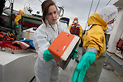 On his return to the Greenpeace ship Rainbow Warrior, Daisuke Miyachi of Greenpeace Japan, undergoes radiation contamination checks conducted by radiation safety advsior Ike Teuling) after being at sea collecting sea water and seaweed samples to monitor radiation contamination levels. As the ship sails up the eastern coast of Japan, in the vicinity of Fukushima, in Japan, Tuesday 3rd May 2011.