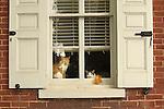 Cats Seasonal