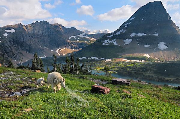 European Bison habitat in the Carpathian Mountains : Online ...