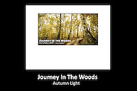 JOURNEY IN THE WOODS