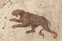 Fresco of an animal, possibly a panther, from the cubiculum of the Casa dell Efebo, or House of the Ephebus, Pompeii, Italy. This room is decorated in the Fourth Style of Roman wall painting, 60-79 AD, a complex narrative style. This is a large, sumptuously decorated house probably owned by a rich family, and named after the statue of the Ephebus found here. Pompeii is a Roman town which was destroyed and buried under 4-6 m of volcanic ash in the eruption of Mount Vesuvius in 79 AD. Buildings and artefacts were preserved in the ash and have been excavated and restored. Pompeii is listed as a UNESCO World Heritage Site. Picture by Manuel Cohen