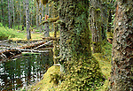 Temperate rainforest bog, Bartlett Cove, Glacier Bay National Park and Preserve, Alaska, USA